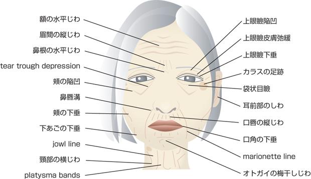 「老化現象」の検索結果 - Yahoo!検索(画像)